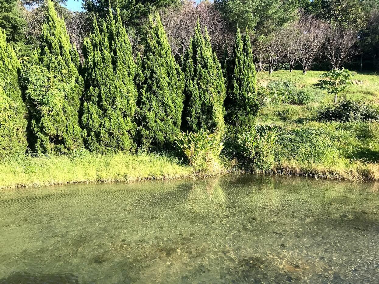 清澈的山那村生態池