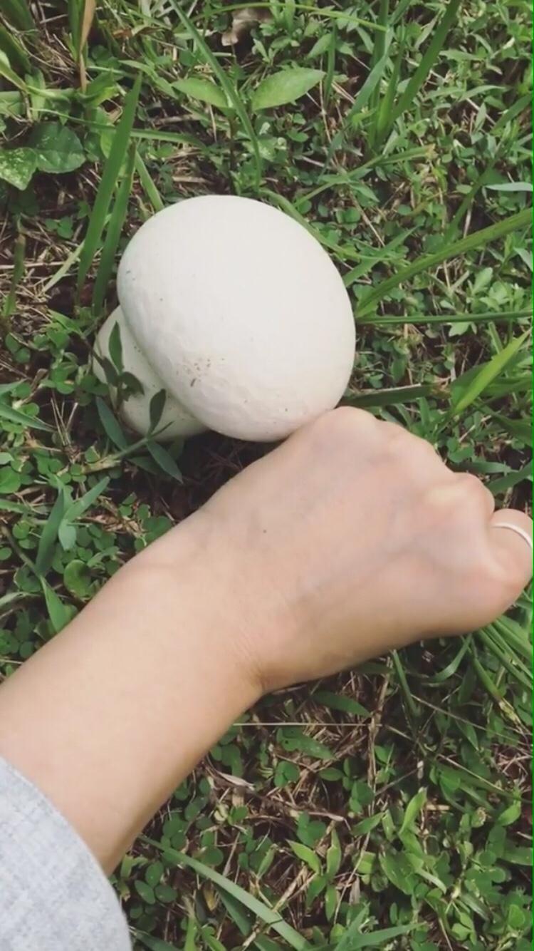 草地上的白饅頭