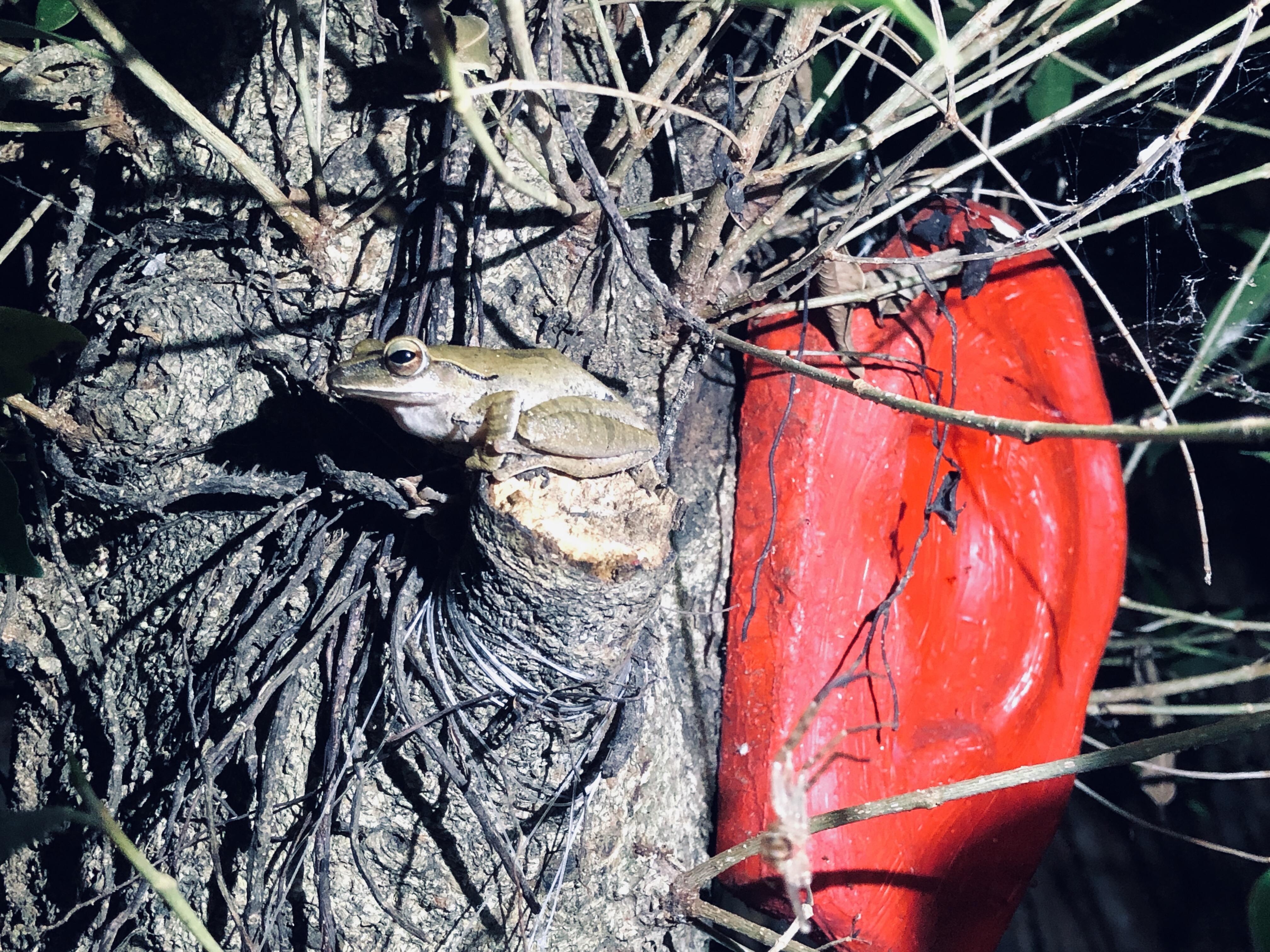 蛙蛙也想聽
