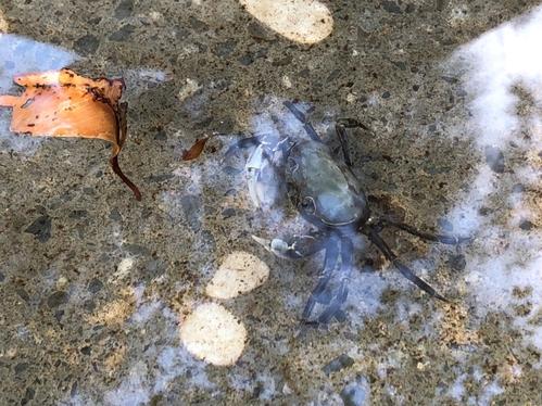 蟹蟹你的愛